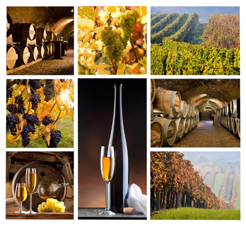 A Novice's Guide to Winery Tourism