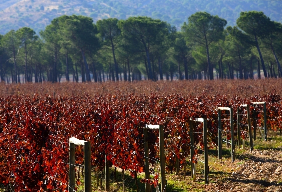 Red wines from Ribera del Duero