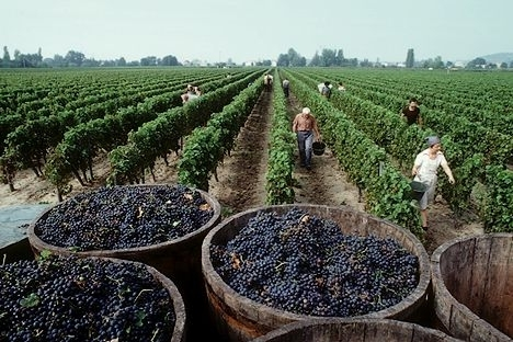 Bordeaux harvest first results: 2012 vintage expected even better than 2011