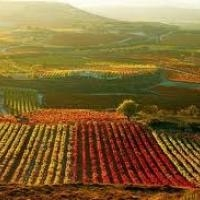 The quality of Rioja wines, a debate