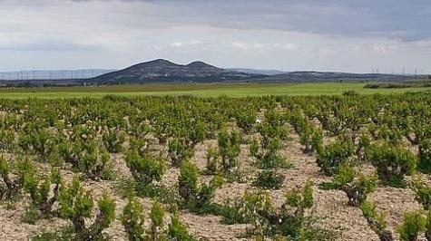 Garnacha, defending the native