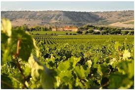 The best value for money wine from Ribera del Duero