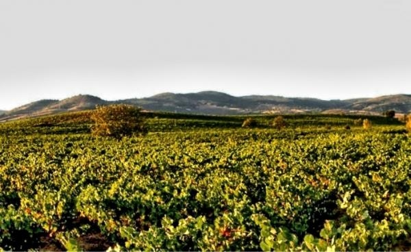 The best Bierzo wines in 2013 by Parker