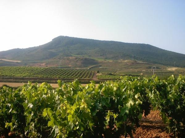Wine tours: Rioja