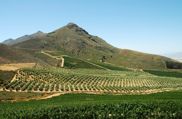 South African wines: to the infinity and beyond