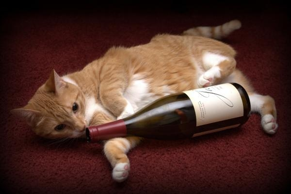 The Denver Cat Bar: the only place you can have a good glass of wine and fun with cats