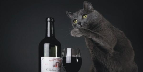 Wine for cats?