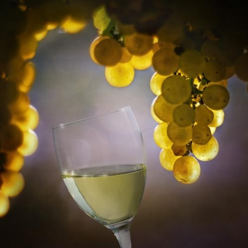 Six health benefits of white wine