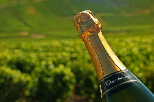 New and better breeds to preserve Champagne