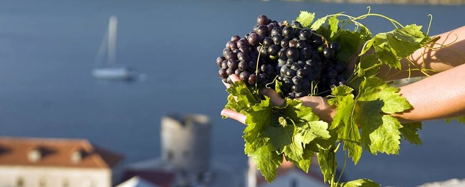 Introduction to Croatian Wines