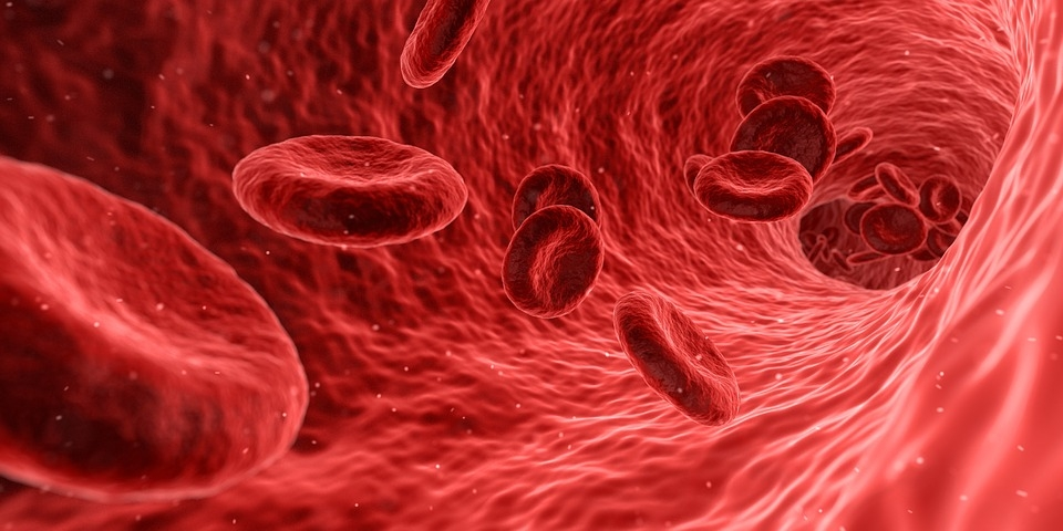 Why Is Red Wine Good For Cholesterol?