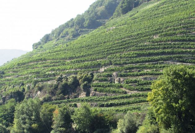 Discover the Austrian wine region of Wachau