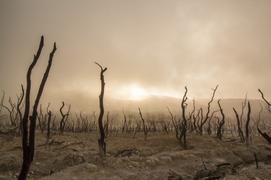 dead vines and desertification