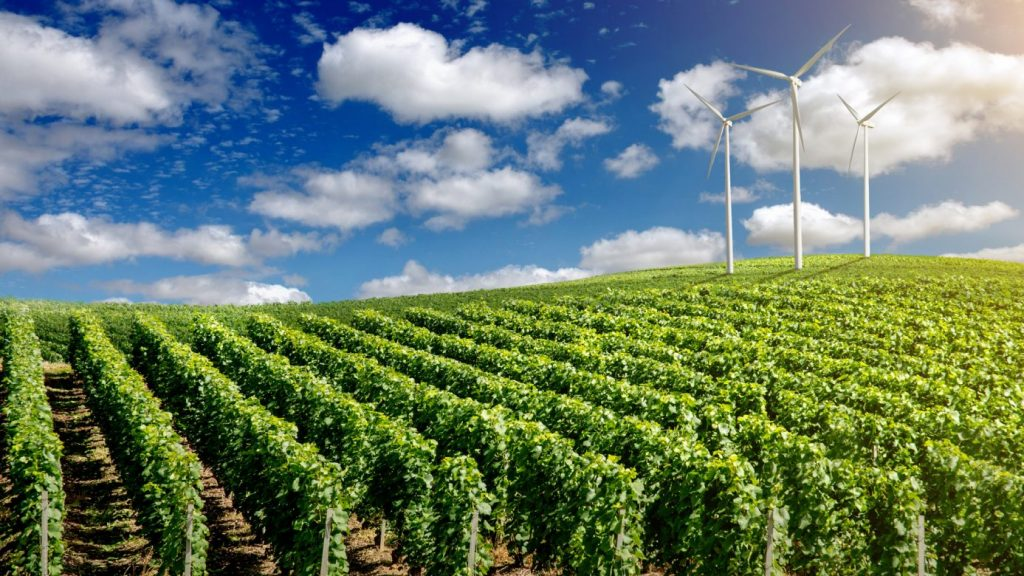 Solutions to help the world of wine withstand climate change